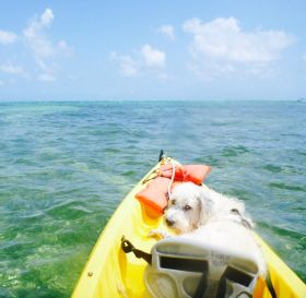 Shaaggy, dog on kyak, Ambergris Caye, Belize – Best Places In The World To Retire – International Living