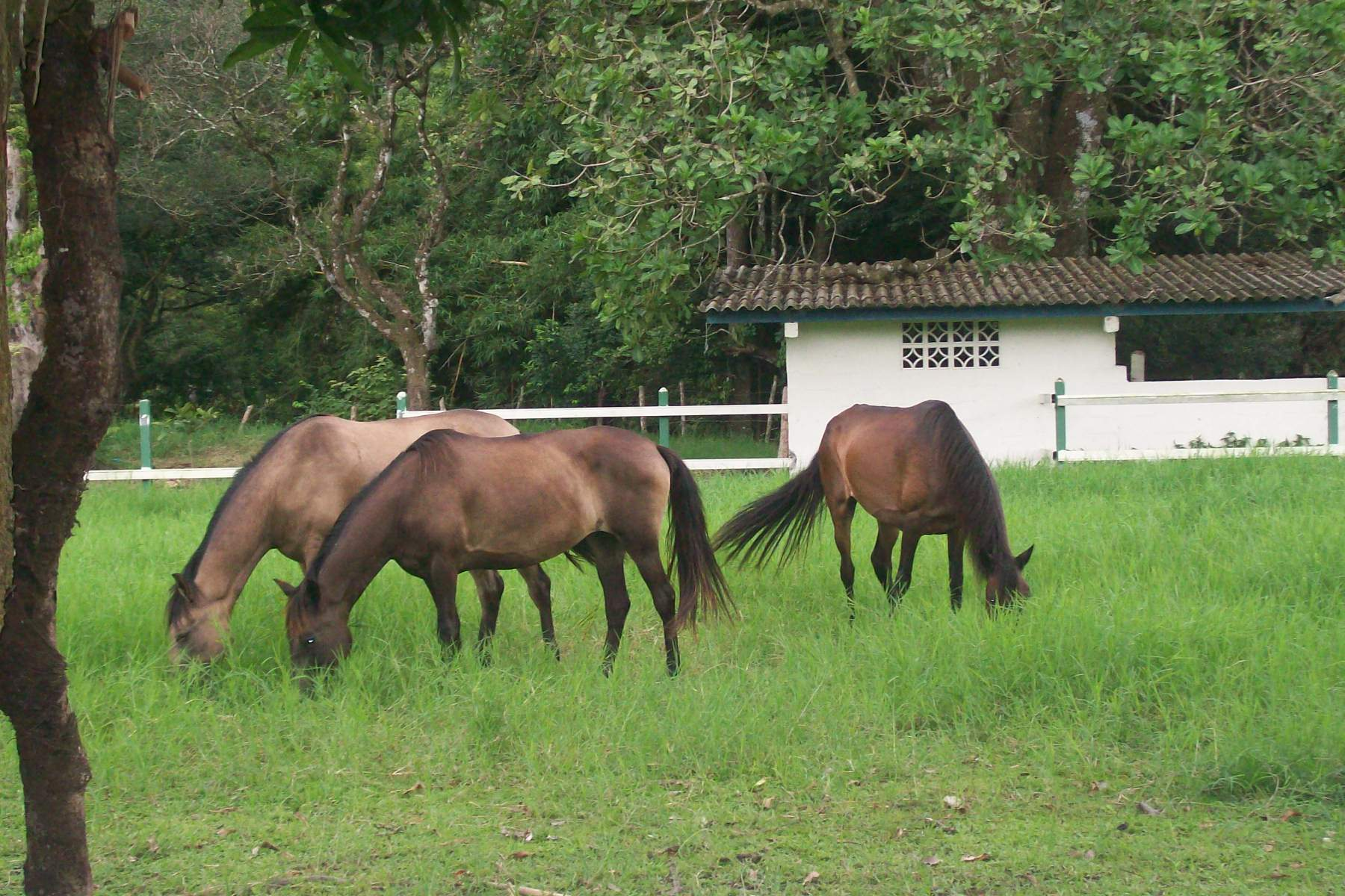 Horses in El Valle, Panama – Best Places In The World To Retire – International Living