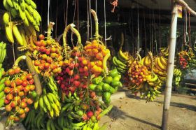Fresh fruit in the Tropics – Best Places In The World To Retire – International Living