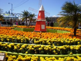 Boquete Flower Fair Windmill – Best Places In The World To Retire – International Living