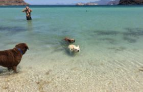 Chuck Bolotin with 3 dogs at beach in Baja California Sur, Mexico