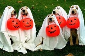 Dogs in Halloween outfits