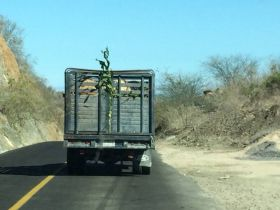 Following a truck moving too slowly in Mexico