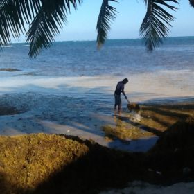 Man with his dog on the beach at San Pedro, Ambergris Caye, Belize – Best Places In The World To Retire – International Living