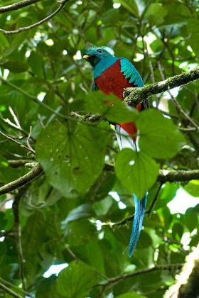 Quetzal in Volcan, Panama – Best Places In The World To Retire – International Living