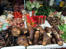 Root vegetables at Punta Gorda Market, Belize – Best Places In The World To Retire – International Living