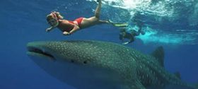 Snorkeling next to a whale shark in Mexico – Best Places In The World To Retire – International Living