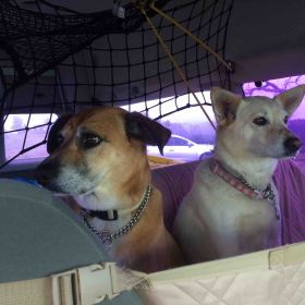 Traveling with two dogs to Mexico in a big white van