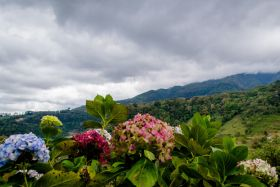 View of the mountains near Coronado, Panama, showing flowers – Best Places In The World To Retire – International Living