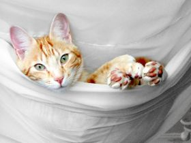 Painting of a cat in a hammock – Best Places In The World To Retire – International Living