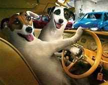 Dogs driving