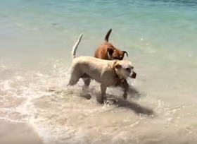Expat dogs in Mexico – Best Places In The World To Retire – International Living