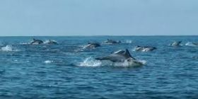 Dolphins jumping off Isla Mujeres – Best Places In The World To Retire – International Living
