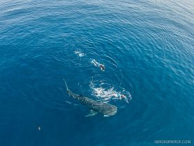 View from boat of man swimming with whale shark in Cancun – Best Places In The World To Retire – International Living