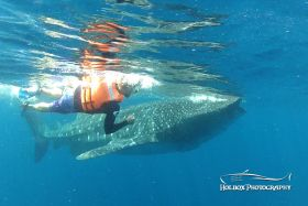 Man holding onto whale shark off Cancun – Best Places In The World To Retire – International Living