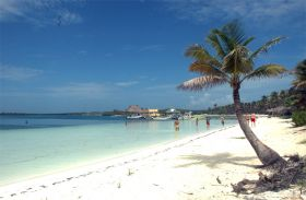Palm trees on the shore of  Isla Contoy – Best Places In The World To Retire – International Living