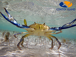 Crabs in the water in Isla Contoy – Best Places In The World To Retire – International Living