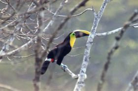 Chestnut Mandible Toucan – Best Places In The World To Retire – International Living