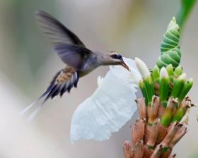 Bird by flower in Panama – Best Places In The World To Retire – International Living
