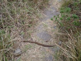 Pit Viper on the trail to the summit of the mountain Volcán Barú in Panamá – Best Places In The World To Retire – International Living