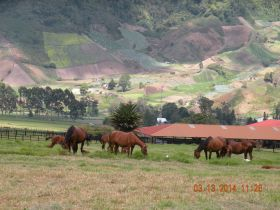 Cerro Punta Panama horse farm with crops in the background. – Best Places In The World To Retire – International Living