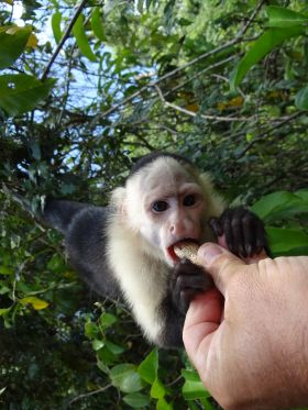 Feeding a Monkey in the Lake Gatun part of the Panama Canal – Best Places In The World To Retire – International Living