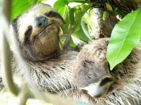 Anne-Michelle Wand Bocas Del Toro, Panana sloth – Best Places In The World To Retire – International Living